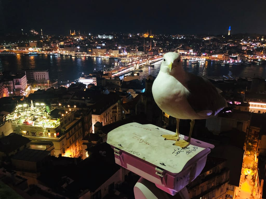 A seagull sitting on top of Galata Tower.