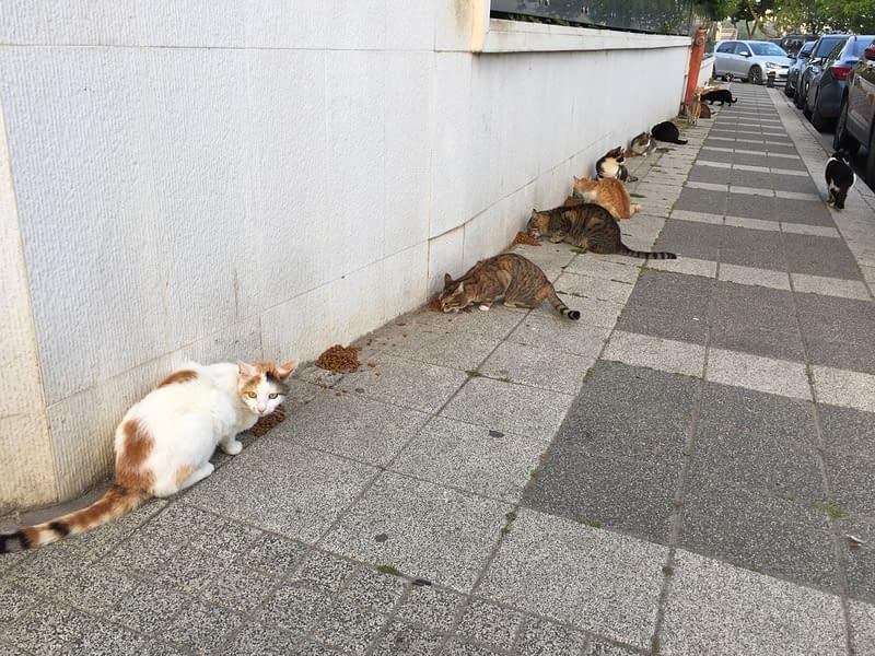 Stray cats feeding in Istanbul