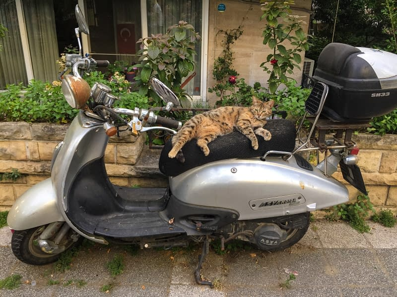 A tabby cat chilling on top of a scooter in Istanbul